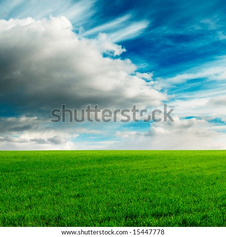 green meadow covered by a grass