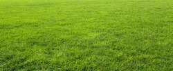 Green meadow grass field for football