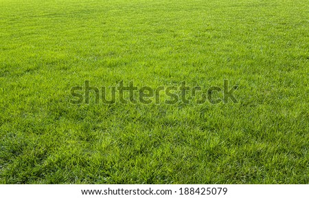 Green meadow grass field for football