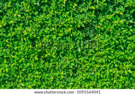 Green meadow , Green texture of grass is in a garden