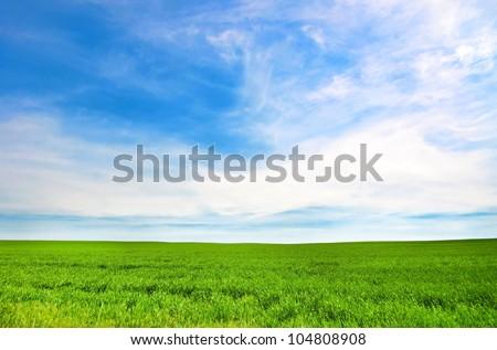 Green meadow in a blue cloudy sky