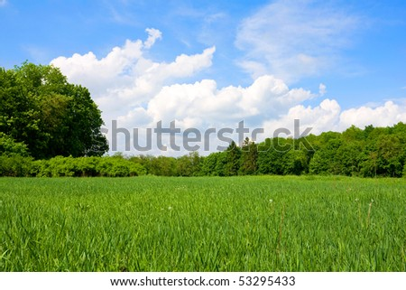 green meadow in forest in nice summer day