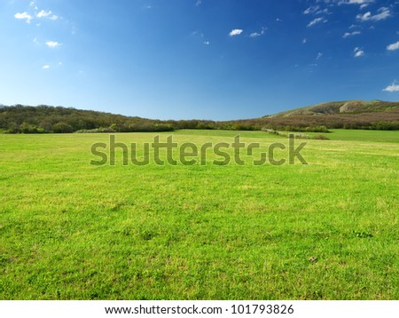 Green meadow in mountain valley. Spring composition