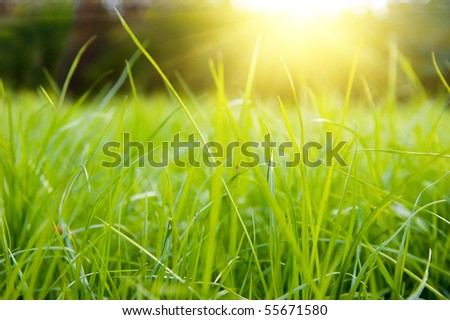 Green meadow in summer sun rays