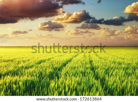 Green meadow. Nature composition. #172613864