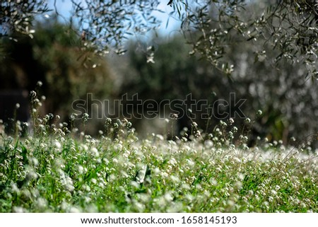 Green meadow of wild flowers with trees in background and hanging green branch in foreground Foto stock ©