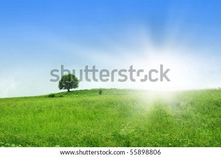 green meadow on sunny day