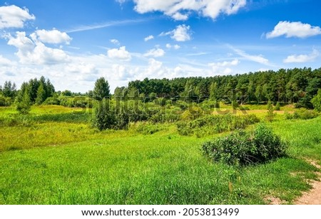 Green meadow on the edge of the forest. Summer green grassland. Summer grassland landscape