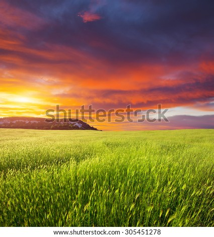 Green meadow on the sunset. Composition of nature. #305451278