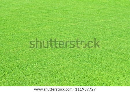 green meadow texture and material