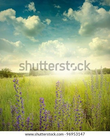 Green meadow under blue sky with cloud