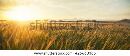 Green meadow under blue sky with clouds #425660365