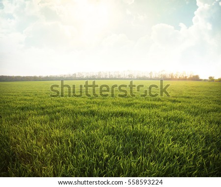 Green meadow under blue sky with clouds  #558593224