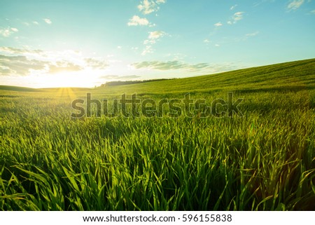 Shutterstock Green meadow under blue sky with clouds