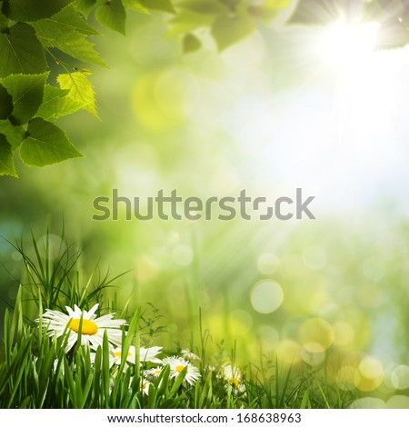 Green meadow with daisy flowers, natural backgrounds for your design