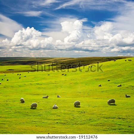 Green meadow with flock of sheep
