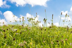 Green meadow with grasses and blue sky with white clouds