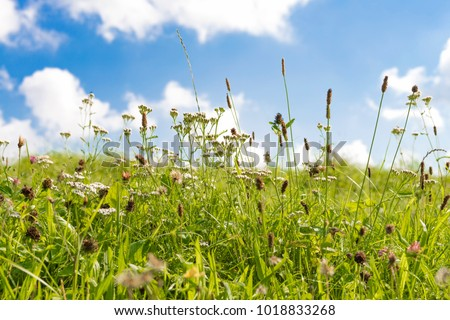 Green meadow with grasses and blue sky with white clouds Stock photo ©