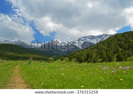 Green meadow with snowy mountains on background, Sheveli gorge, Kyrgyzstan #376315258