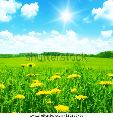Green meadow with yellow dandelions,blue sky and sun.