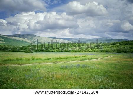 green meadows  green meadows photo cells on a sunny summer day Crimea