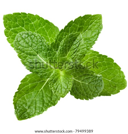 green mint close up isolated on white background