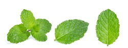 green mint leaf isolated on white background