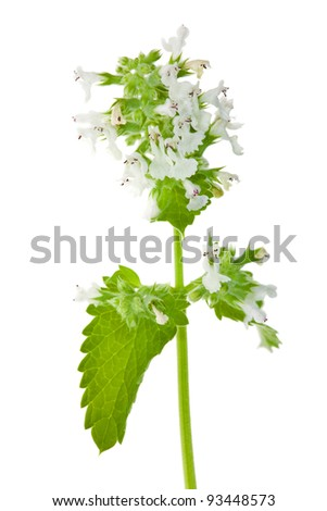 green mint leaves and flowers isolated on white background
