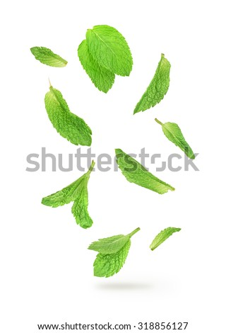 green mint leaves falling in the air isolated on white background