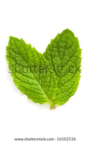 green mint leaves isolated against white background
