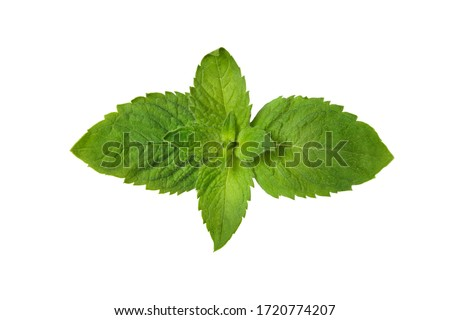 Green mint leaves isolated on white background Foto stock ©
