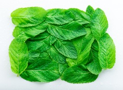Green mint leaves on a light background, copy space