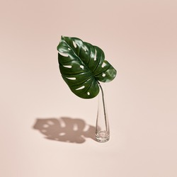 Green Monstera leaf and vase minimal summer or spring still life on pastel pink table. Sunlight, hard shadow. Floral, interior, nature concept