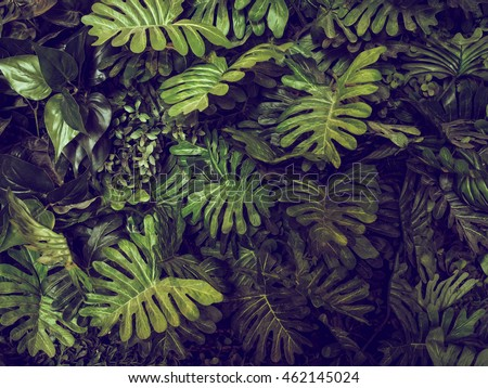 stock photo green monstera leaves texture for background top view in dark tone 462145024 - Каталог — Фотообои «Текстуры»