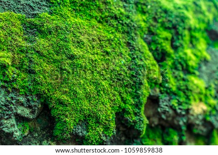Green mos background, stone with green mos . #1059859838