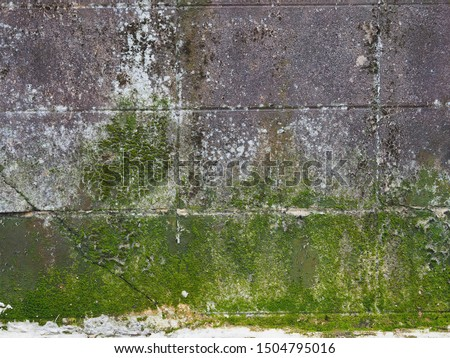 Green mos on brick wall texture, Green plant and mos growing on the brick wall, Can use as wallpaper or background. Stock fotó ©