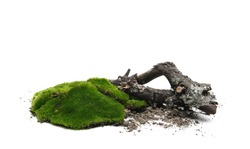 Green moss and branch with dirt isolated on white background and texture