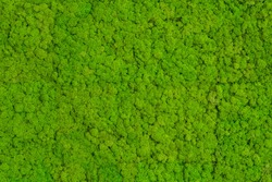 Green Moss background, mossy texture