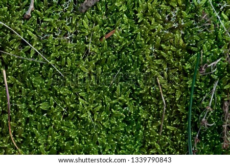 Green moss background texture beautiful in nature. Sprouts of grass #1339790843