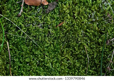 Green moss background texture beautiful in nature. Sprouts of grass #1339790846