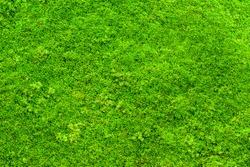 Green moss backgruond close up