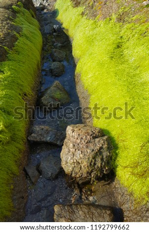 Green moss growing on the wet little narrow channel waterway, with some large stones, as natural background.