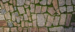 Green moss grows between bricks on pathway, pattern texture