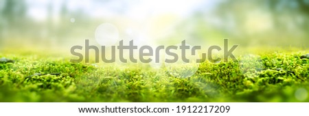 Green moss in a bright forest clearing. Seasonal natur background with bokeh and short depth of field. Close-up with space for text.
