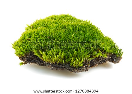 green moss is isolated on a white background. Green moss isolated on white background closeup, macro, full focus