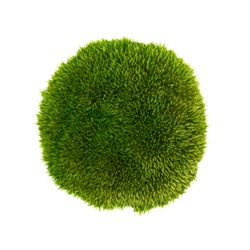 Green moss isolated on a white background close-up. moss on a white background. Full focus. No shadows.
