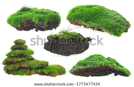 Green moss isolated on a white background - collection.