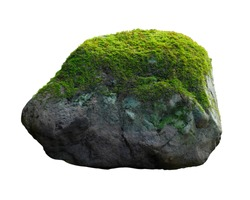 Green moss meadow on rock isolated on white background. This has clipping path.