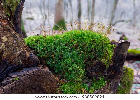 Green moss on a background of spring forest. Full focus. Beautiful green moss on the floor. Beautiful background of moss for wallpaper. Green moss covers dead wood in the forest.