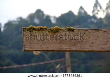 green moss on piece of wood